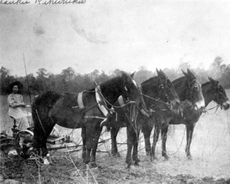 Wakulla County farmer, 1890s. Photo from State Archives of Florida, floridamemory.com